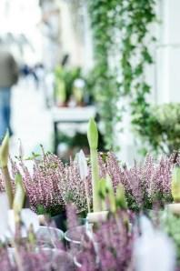 Bruges, Flower shop