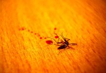 Mosquito control tips