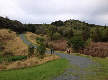 The Heritage trail is a 2 hour return (3.9km) wall that with spectacular views, a WW2 gun emplacement, and native forest and wetland. Just follow the yellow markers.
