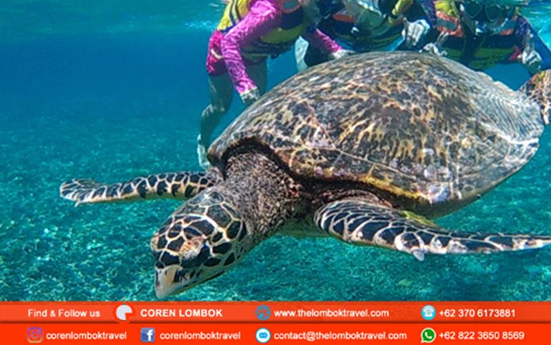 Lombok Snorkeling Tours