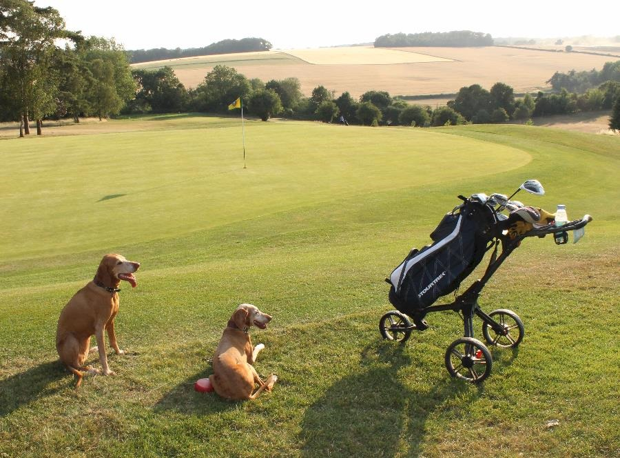 Dogs on golf course at sunset