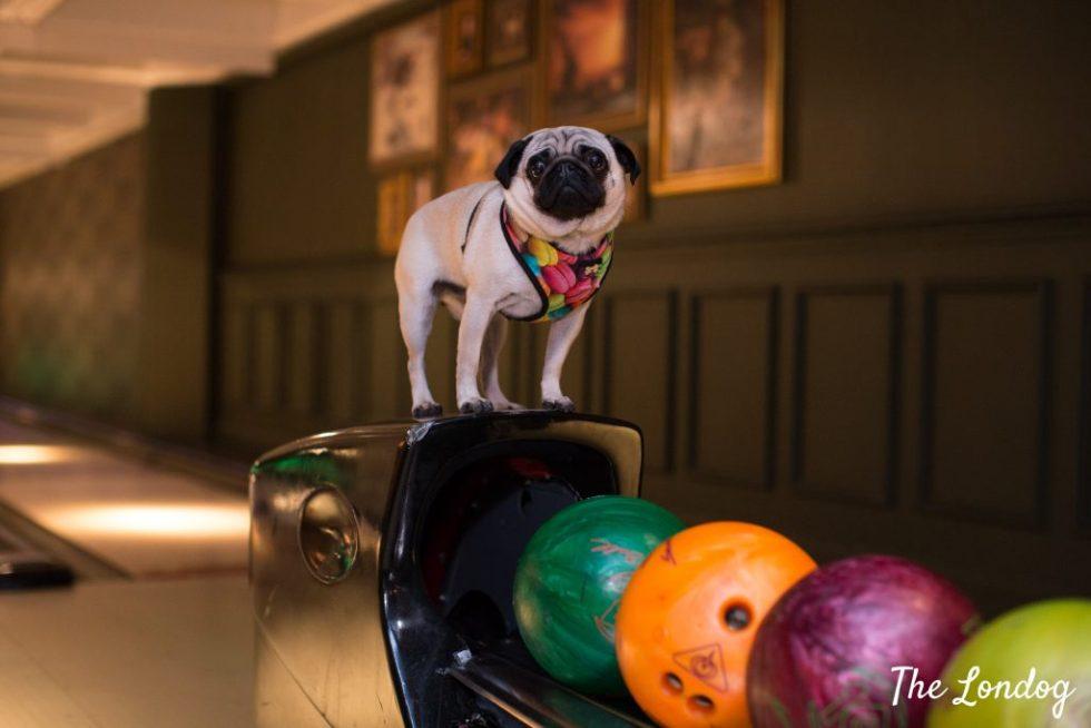 dog at bowling lanes