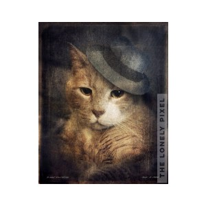 ginger cat portrait