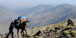 07 Mule