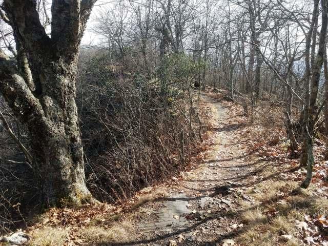 Rhododendron Trail.jpg