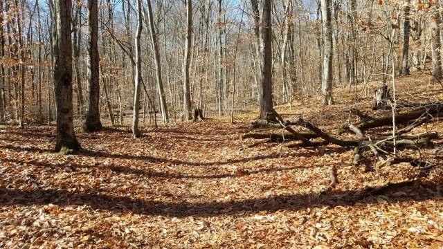 Trail Marks.jpg