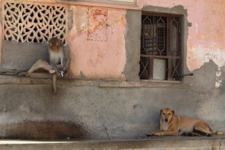 Monkies and Dogs - Metres and worlds apart
