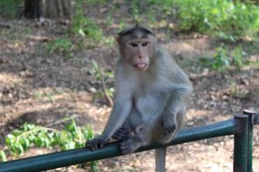 special needs monkey