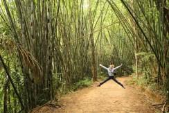 Khao Sok, bamboo forest