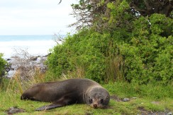 Close up Seal encounter