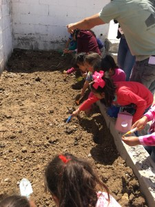 kids planting seeds in garden