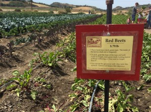 Each crop is labeled with instructions for picking (photo by Nikki Kreuzer)