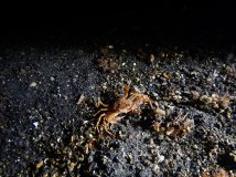 Some crab we found scurrying along