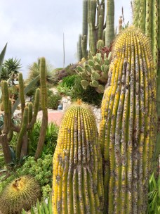 The Exotic Gardens were full of all kinds of stunning cactus plants
