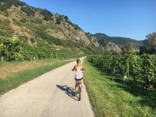 Wachau Valley Vineyards