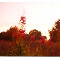 wildflowers-on-wanstead-flatslores.jpg