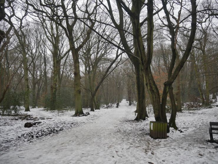 Highgate Woods snow