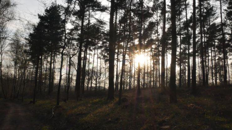 Egypt Woods
