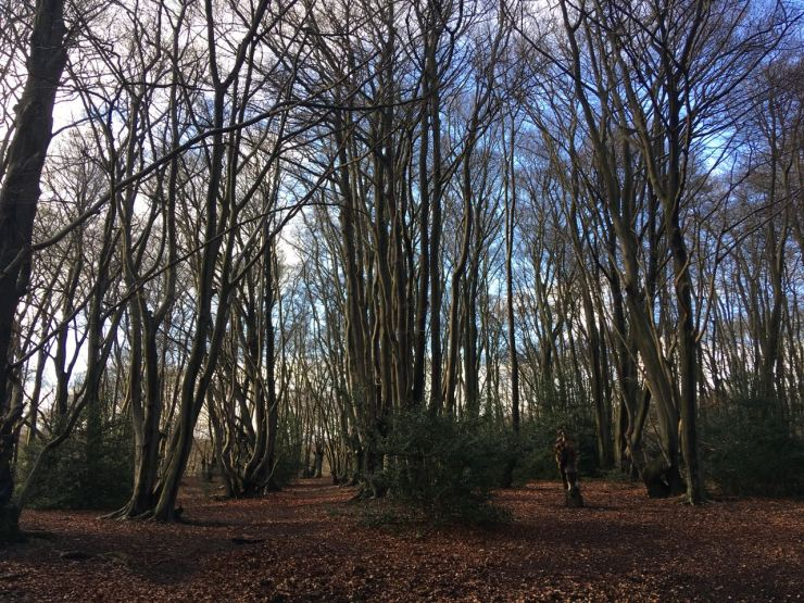 Trees Epping Forest