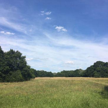 Whitehall Plain