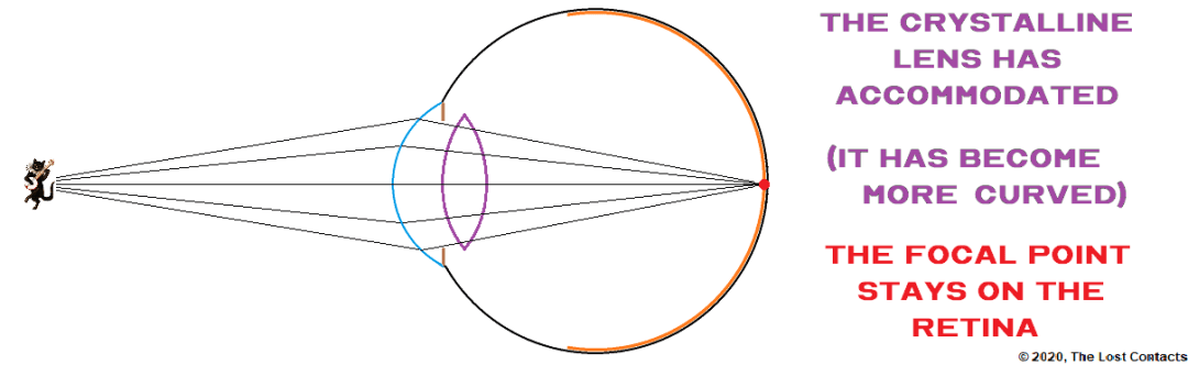 The Crystalline Lens Medium Curvature