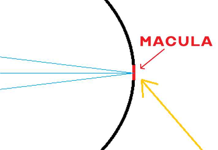 Close up of light focusing on the macula
