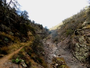 The park service warns that there are no reliable water sources in the backcountry of Big Bend. Climbing out of Boot Canyon to the South Rim, Boot Creek is dry, a stream-bed of lava rock, polished and sculpted from past flows.