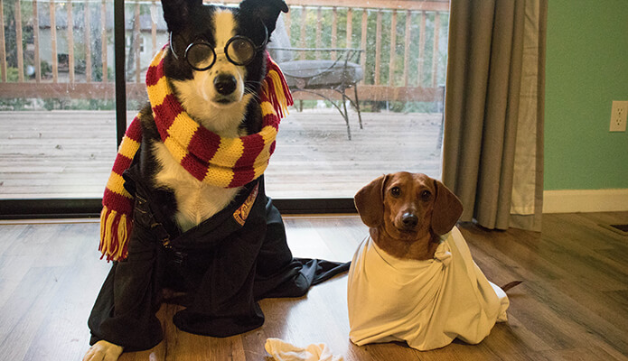 Tucker as Hairy Pawter and Mr. Big the Houseweenie #thelovelygeek #halloween