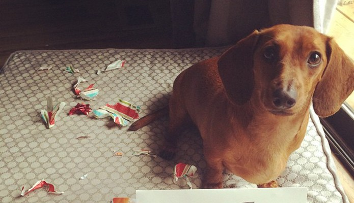 15 Dogs Explain Their Biggest Messes