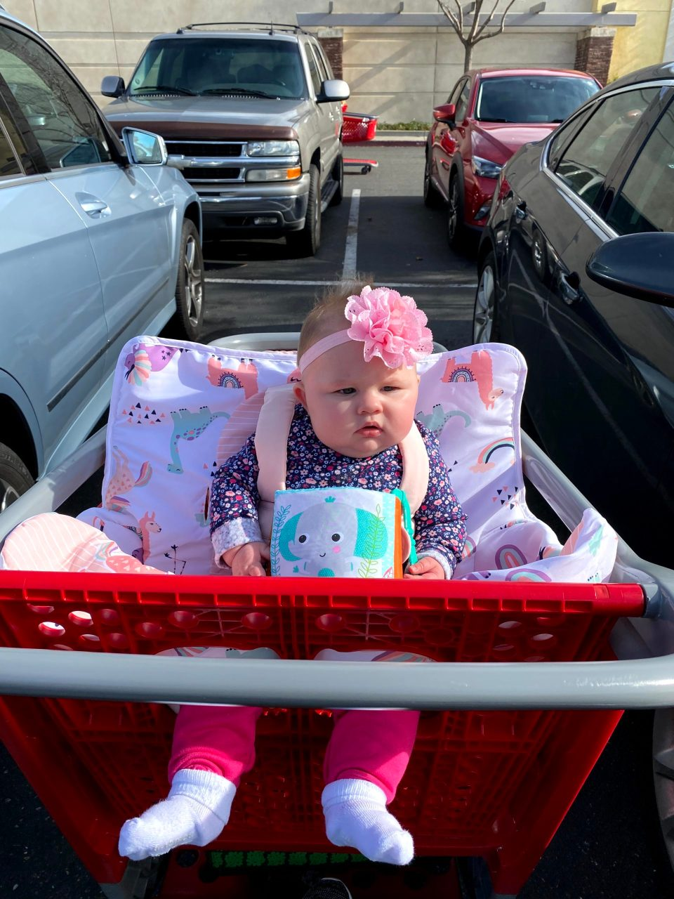 Lily in the shopping cart at Target