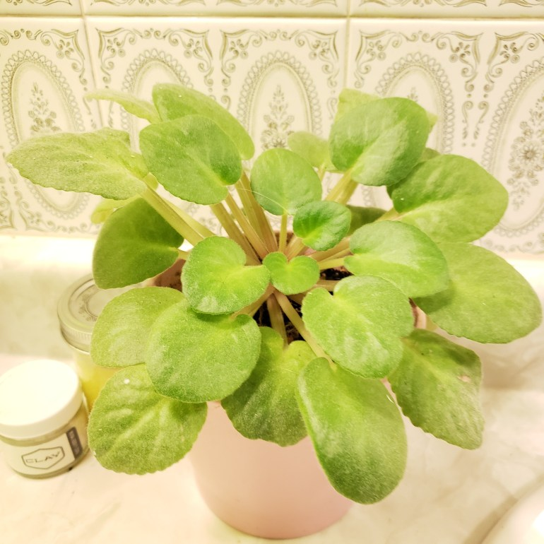 Eco-Friendly Bathroom Tips & Swaps | Luxuriously Thrifty