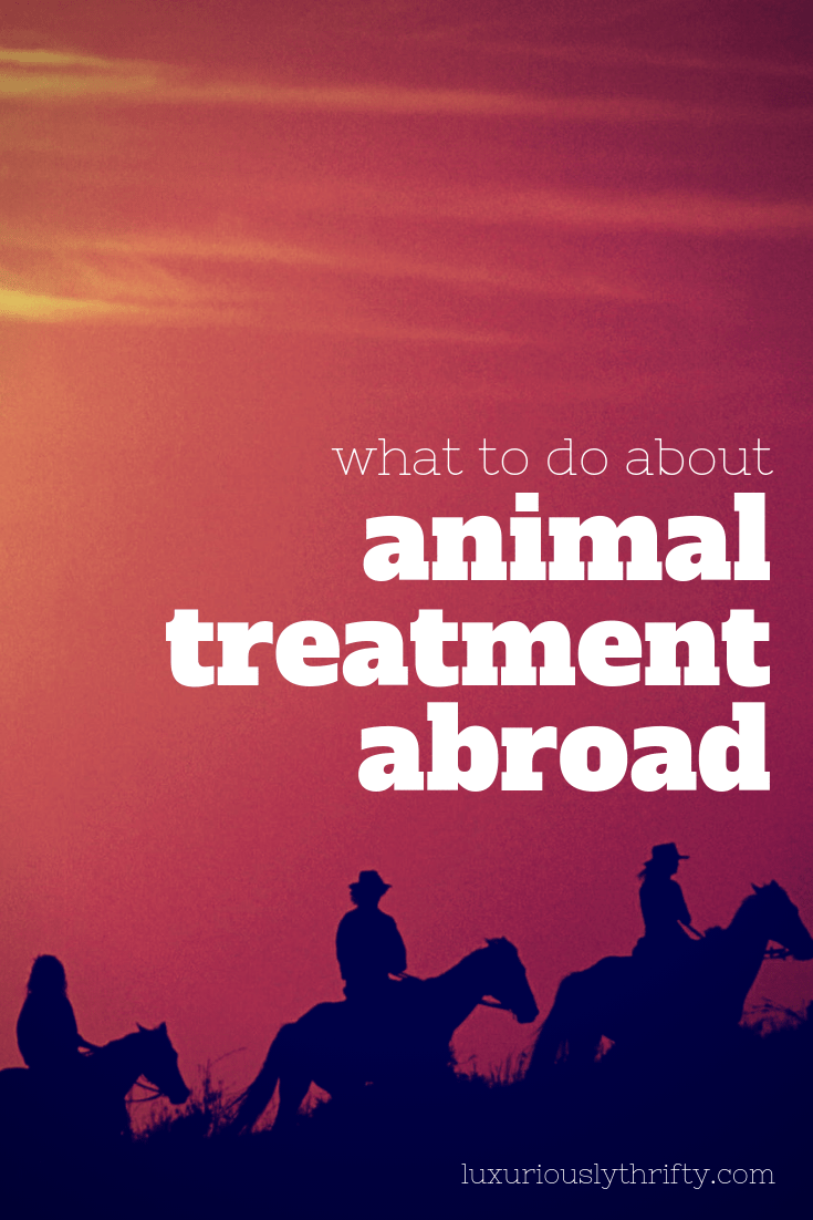 Animal treatment while traveling   Luxuriously Thrifty