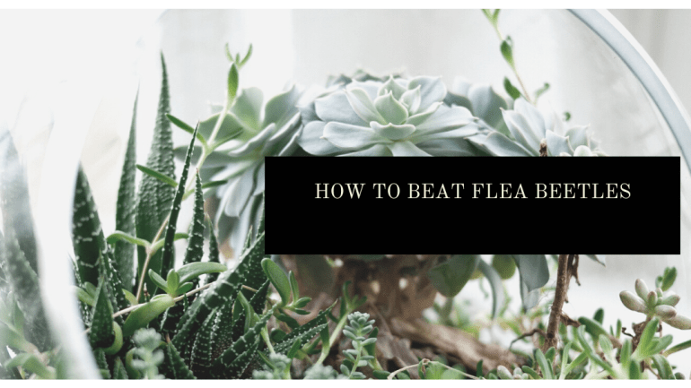 How to protect your garden from an invasion of flea beetles | Luxuriously Thrifty