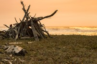 Driftwood at Dry Lagoon during a sunset.
