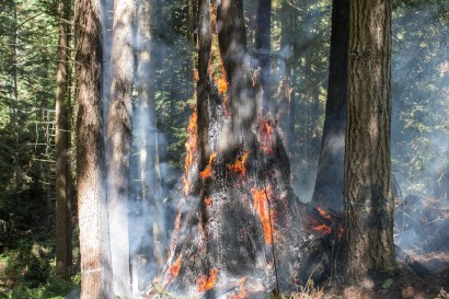 Tree burning, Arcata Fire September 14. Photo by Ian Benjamin Finnegan Thompson