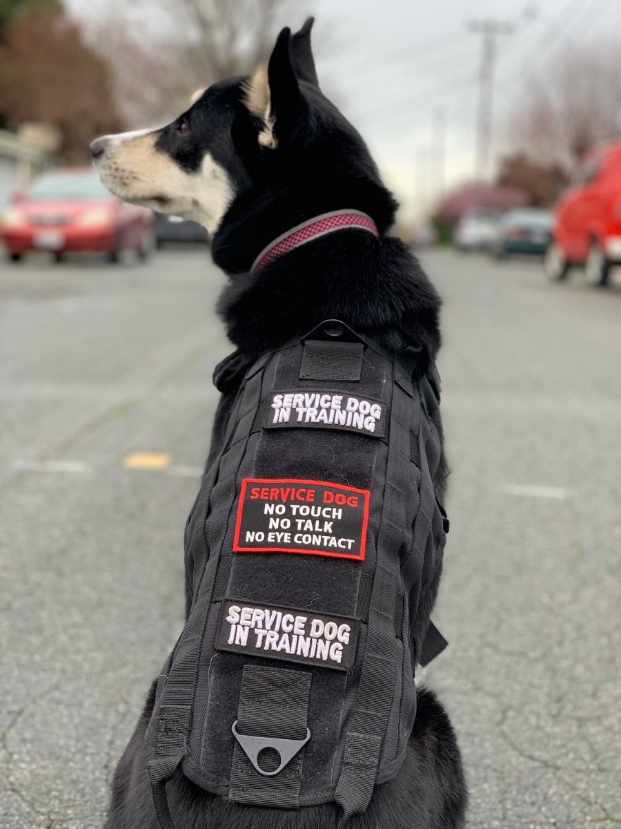 OPINION: Fake service dogs a real problem