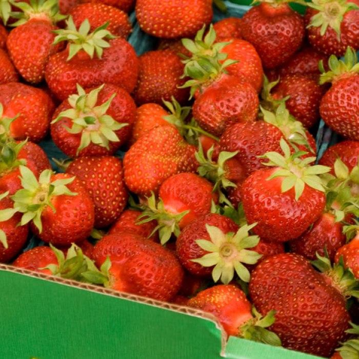 Hood Early Season Oregon Strawberries