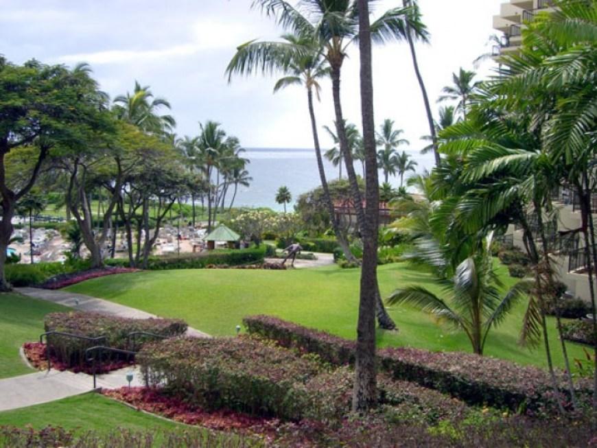 Maui Sweet | LunaCafe