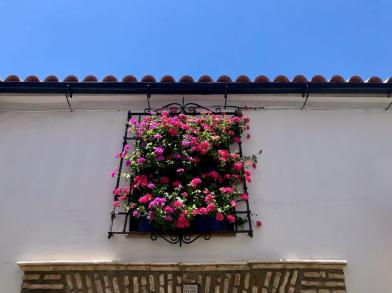 Andrew_A_Forbes_cordoba_andalucia (1)