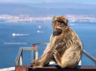 Andrew_Forbes_Gibraltar (1)