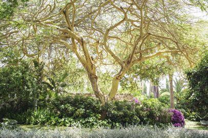 Botanical Gardens (8)