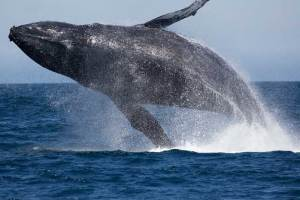 How to Maximize Whale Watching in San Diego
