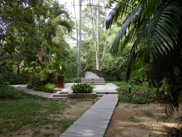 JUNGLE WALKWAY TO BEACH