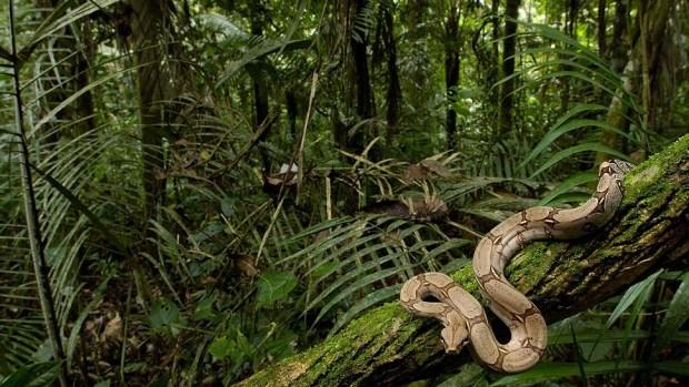 THE AMAZON, ECUADOR