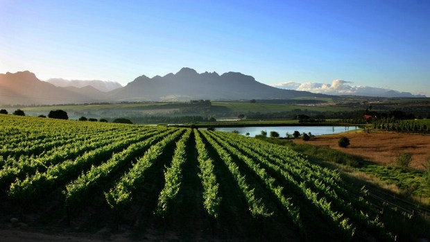 ENTERTAIN YOUR TASTE BUDS IN THE CAPE WINELANDS