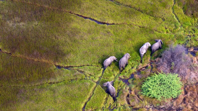 FLY OVER AFRICA'S WILDLIFE ON THE WAY TO ABU CAMP (BOTSWANA)