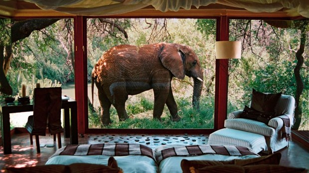 SANCTUARY MAKANYANE SAFARI LODGE, NORTH WEST PROVINCE