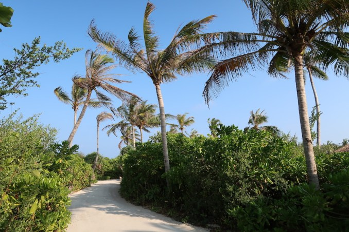 MEDHUFARU ISLAND: JUNGLE PATH