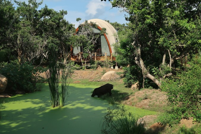 WILD COAST TENTED LODGE: WATERHOLES