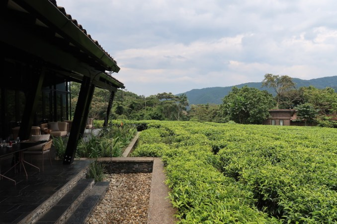 ONE&ONLY NYUNGWE HOUSE: RESORT GROUNDS
